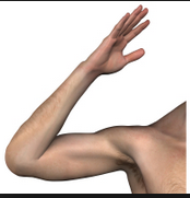 square-root-arm-1.png